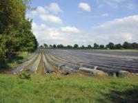 Sezonowa praca Anglia na farmie przy zbiorze szparagów od zaraz Luton