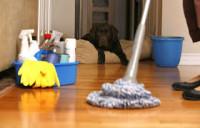 Dam fizyczną pracę w Anglii przy sprzątaniu domów i mieszkań Londyn