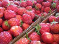 Praca Anglia przy zbiorach truskawek bez języka od zaraz Birmingham