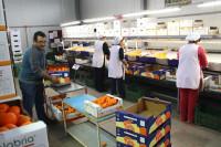 Sezonowa praca w Anglii przy pakowaniu owoców bez języka Chartham