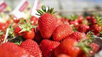 Zbiory truskawek od zaraz praca Anglia na wakacje 2014 dla studentów UK