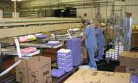 Praca Anglia w Devon pakowanie jajek na linii produkcyjnej bez języka