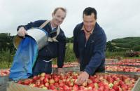 Od zaraz praca w Anglii przy zbiorach jabłek dla studentów Crawley