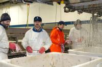 Dam pracę w Anglii na produkcji w przetwórni rybnej Pateley Bridge