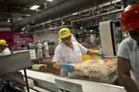 Praca Anglia na produkcji spożywczej bez znajomości języka Milton Keynes