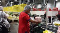 Od zaraz praca Anglia pakowanie słodyczy przy taśmie bez znajomości języka Sheffield