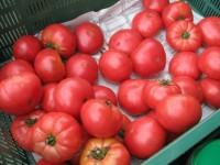Zbiory warzyw w szklarni sezonowa praca Anglia od zaraz bez języka Northampton