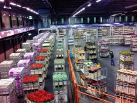 Dam pracę w Anglii w fabryce kwiatów Hull bez języka od marca 2015