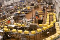 Oferta pracy w Anglii dla kobiet na produkcji sera Neasden od zaraz
