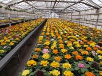 Sezonowa praca Anglia na farmie dla mężczyzn przy kwiatach Southampton