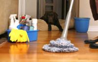 Dam pracę w Anglii dla kobiet przy sprzątaniu biur i domów Manchester