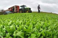 Dam sezonową pracę w Anglii w rolnictwie przy zbiorach warzyw i owoców