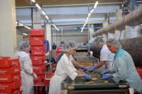 Oferta pracy w Anglii na produkcji przy pakowaniu spożywczym Bolton UK