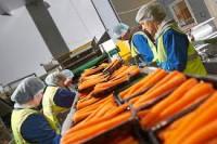 Anglia praca w Liverpoolu przy pakowaniu warzyw i owoców bez doświadczenia