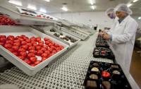 Produkcja czekoladek praca w Anglii dla par bez znajomości języka Londyn 2016