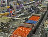 Dam pracę w Anglii przy pakowaniu owoców i warzyw w Knowsley UK