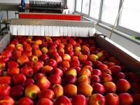 Dla par Anglia praca przy pakowaniu owoców-warzyw od zaraz bez języka Londyn