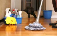 Praca Anglia Osoby do sprzątania domów w Taunton i okolicach