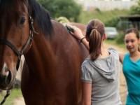 Ogłoszenie sezonowej pracy w Anglii od zaraz dla par Gloucester stadnina koni