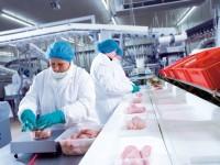 Oferta pracy w Anglii przy pakowaniu fabryka drobiu od zaraz Hereford