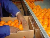 Od zaraz oferta pracy w Anglii przy pakowaniu owoców bez języka Canterbury