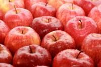 Ogłoszenie sezonowej pracy w Anglii bez języka zbiory jabłek od zaraz Wisbech