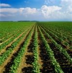 Sezonowa praca w Anglii od zaraz w rolnictwie bez języka na gospodarstwie