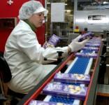 Praca Anglia na magazynie przy pakowaniu w produkcji czekolady Shirebrook