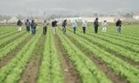 Anglia praca sezonowa od zaraz zbiory warzyw bez znajomości języka Rainford