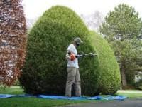Anglia praca od zaraz na stanowisku ogrodnika w sadzie i ogrodzie Dorset