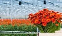 Od zaraz sezonowa praca Anglia w ogrodnictwie przy kwiatach – Cambridge UK