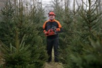 Leśnictwo oferta sezonowej pracy w Anglii od zaraz przy choinkach, Oxford UK