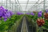 Od stycznia 2018 oferta sezonowej pracy w Anglii przy kwiatach w ogrodnictwie, Exeter