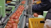 Bez języka praca w Anglii przy pakowaniu owoców z zakwaterowaniem – Chichester, West Sussex.