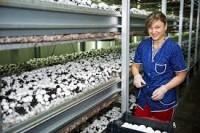 Dam sezonową pracę w Anglii dla kobiet zbiory pieczarek bez języka 2018