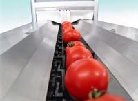 Ogłoszenie pracy w Anglii od zaraz przy pakowaniu pomidorów bez języka Chichester