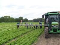 Rolnictwo – sezonowa praca Anglia na polu od zaraz w Lincolnshire UK