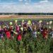 Flower pickers in field 2017