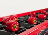 Bez znajomości języka oferta pracy w Anglii przy pakowaniu warzyw, Bognor Regis
