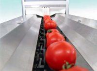 Bez znajomości języka fizyczna praca Anglia od zaraz Southampton sortowanie warzyw