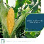 Anglia praca sezonowa od zaraz zbiory kukurydzy cukrowej, Maldon UK