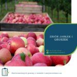 Sezonowa praca w Anglii przy zbiorach gruszek i jabłek od zaraz Kent, Tonbridge 2019