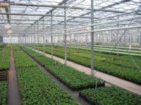Bez języka sezonowa praca Anglia w ogrodnictwie od zaraz Fareham k. Portsmouth UK