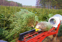 Leśnictwo dam sezonową pracę w Anglii bez języka od zaraz przy choinkach do Świąt Oxford