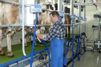 Sezonowa praca Anglia w rolnictwie na farmie przy krowach od zaraz Okehampton