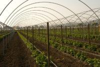 Sezonowa praca Anglia w rolnictwie od zaraz na farmie przy malinach k. Birmingham 2020