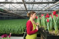 Od zaraz dam sezonową pracę w Anglii przy kwiatach w ogrodnictwie, Hull z językiem angielskim 2020