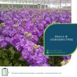 Anglia praca w ogrodnictwie od zaraz przy kwiatach w Spalding UK 2020