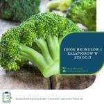 Szkocja praca sezonowa bez języka w UK – zbiory brokułów i kalafiora od zaraz w Kelso