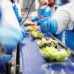 Oferta pracy w Anglii bez znajomości języka przy pakowaniu sałatek od zaraz w fabryce